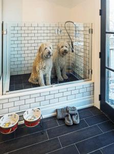 white tiled dog wash